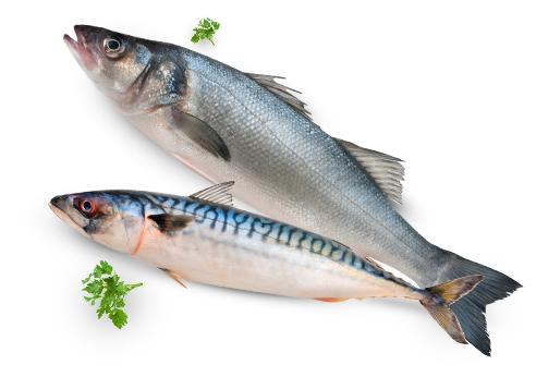 Fisch Inhester